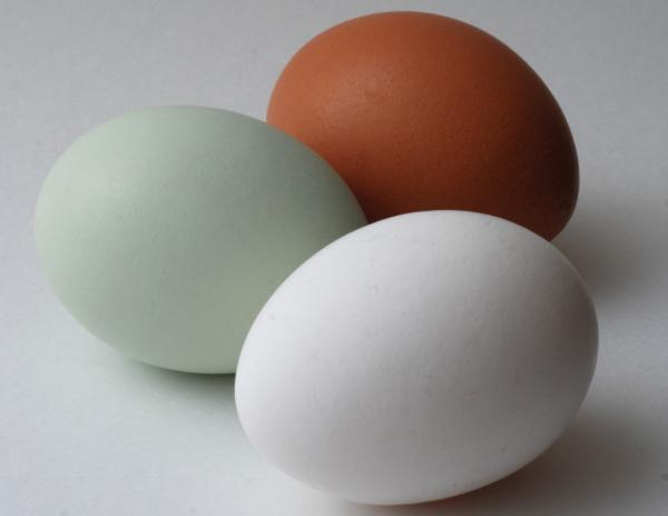 blue-eggs-vs-white-and-brown