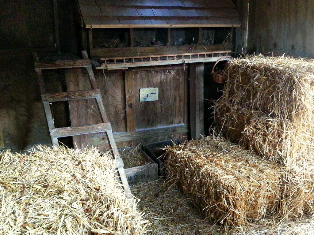 bedding-for-chickens