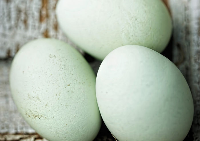 Want Blue Eggs? Pick These Chicken Breeds!