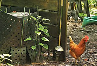 4 Tips for Composting Chicken Manure