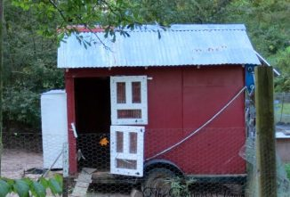How to Build a Chicken Coop for First-Timers