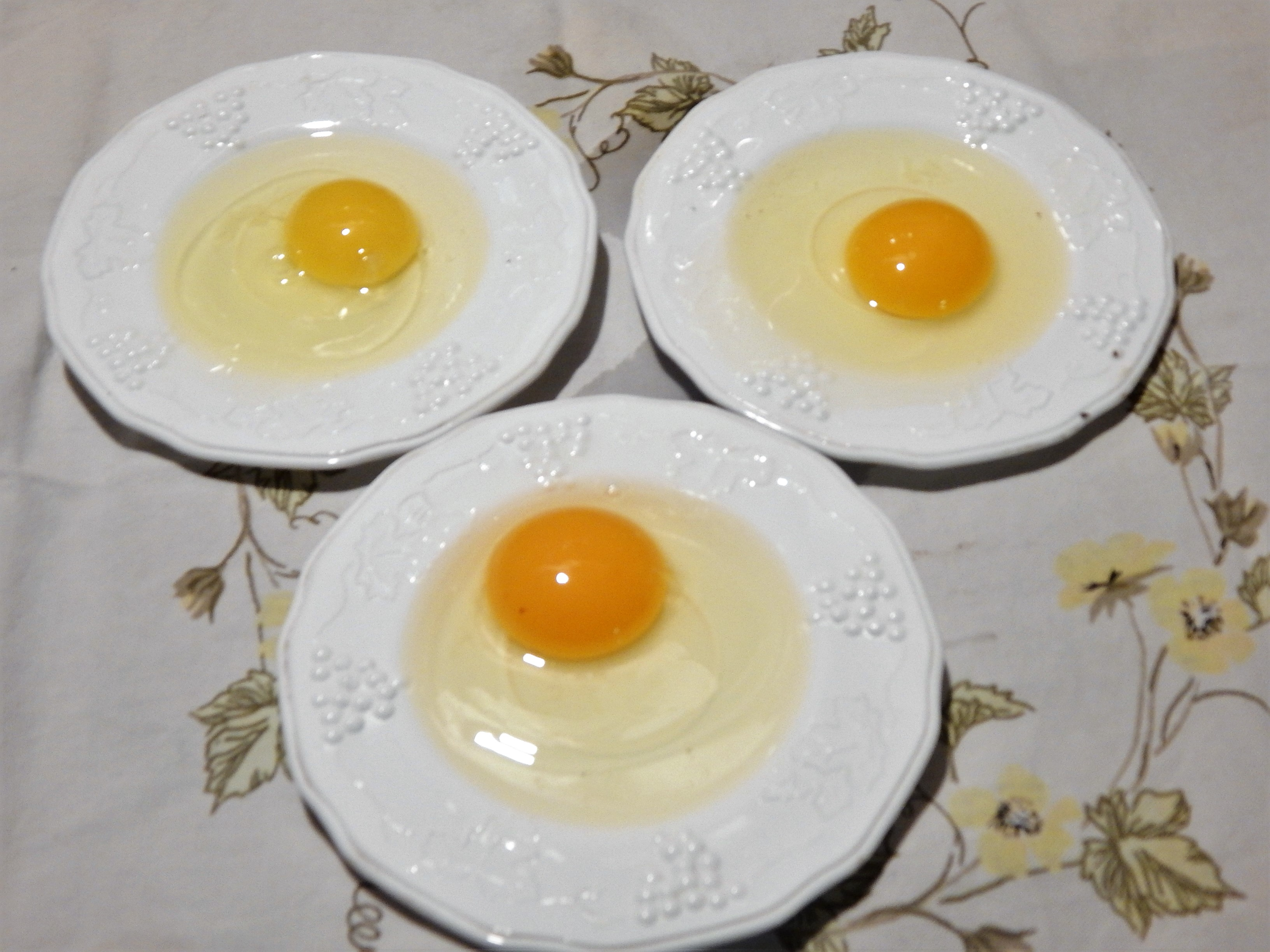 Exploring How Feed Affects Egg Yolk Color