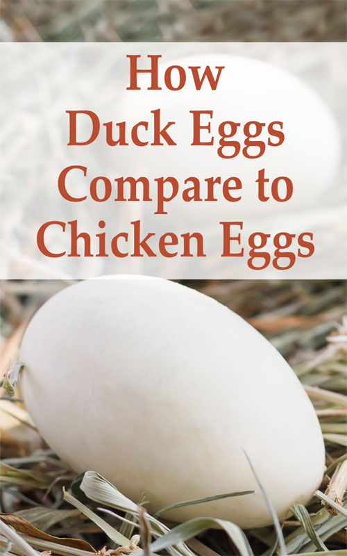 Duck and Chicken Eggs