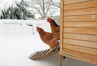 The Pros & Cons of Coop Heating: Do Chickens Need Heat in Winter?