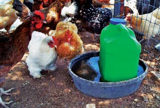 Homemade Poultry Waterer