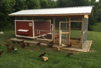 6 Basics for Chicken Coop Design
