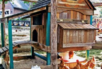 Chicken Coops Special Issue — The Playhouse Chicken Coop