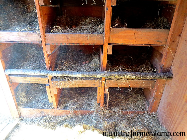 How To Build A Chicken Coop For First Timers Backyard Poultry