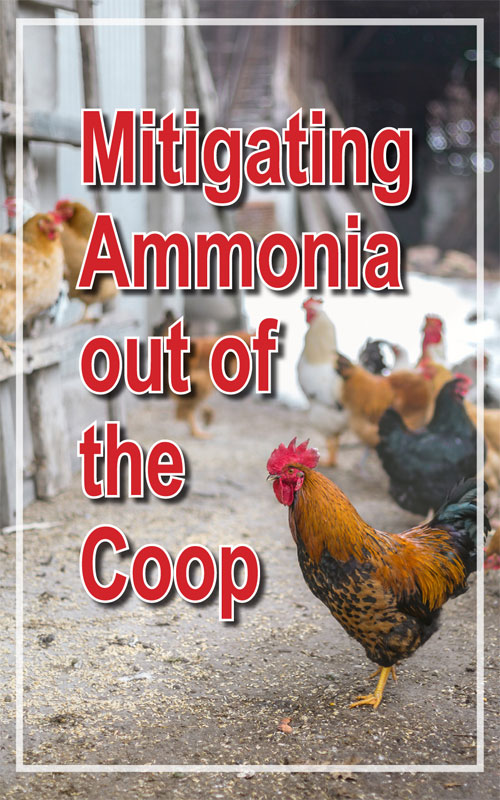 Ammonia Out of Chicken Coop