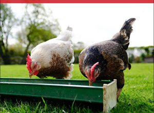 Poultry Feed & Health Guide Flip Book