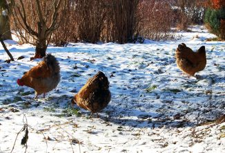 Winter Feed Supplements