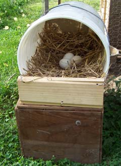 chicken-nesting-boxes