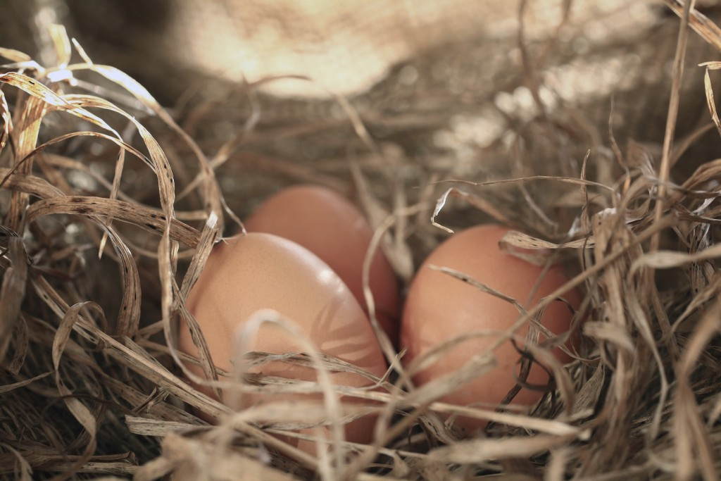 Top 10 Chicken Nesting Boxes