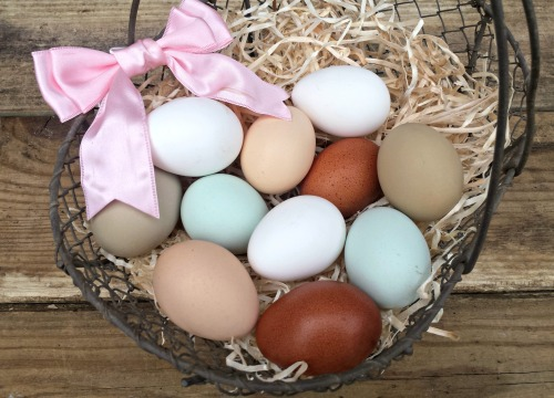 A Guide to Different Colored Chicken Eggs