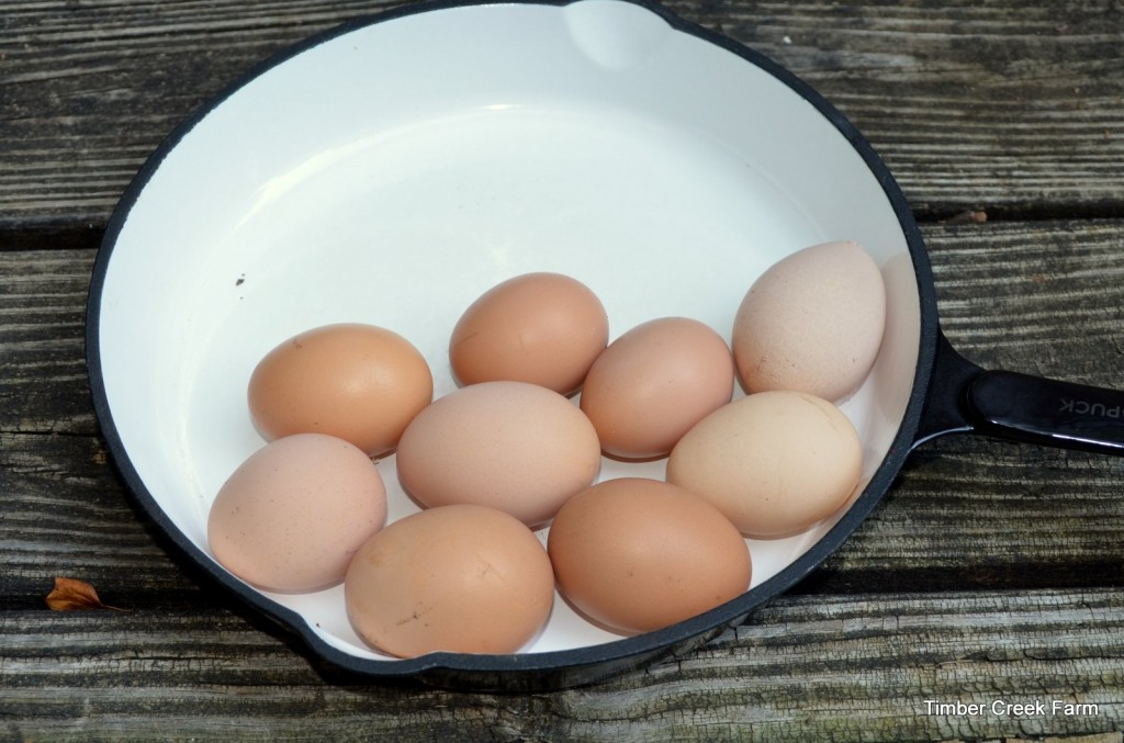 Egg Facts: 5 Reasons To Eat Eggs