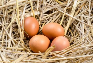 Ask the Expert: Egg-Bound Chickens and Other Laying Issues