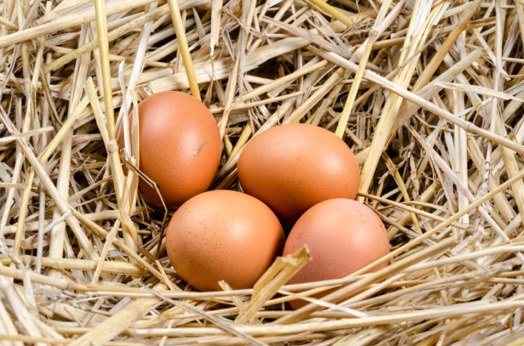 Everything Worth Knowing About Chicken Eggs