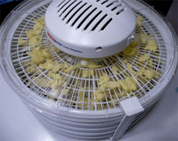 dehydrating-eggs-for-long-term-storage
