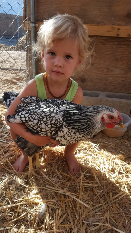 caring-for-chickens