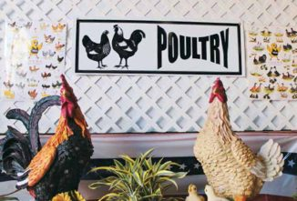 Court's In Session, How To Become A Licensed Poultry Judge