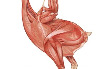 Part Five: The Muscular System
