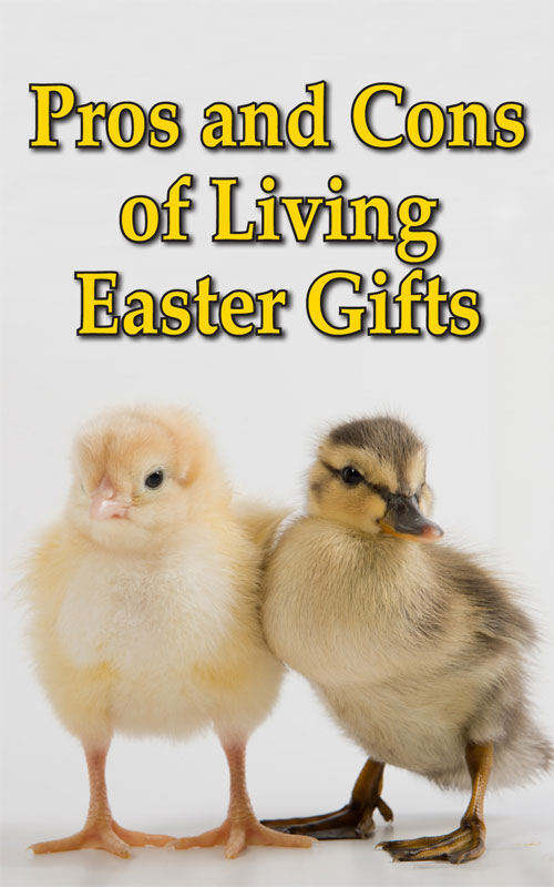 Living Easter Gifts