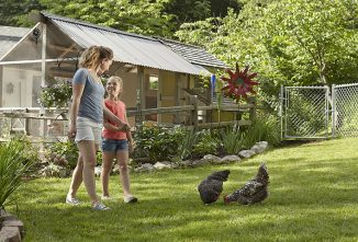 Can I Raise Chickens In My Area?