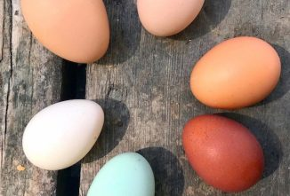 Thin Eggshells Are More Likely to Let Bacteria In