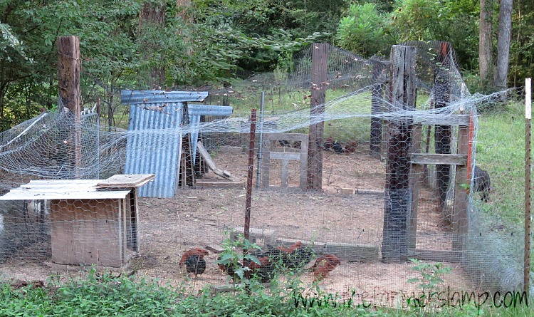 protecting-chickens-from-predators-covered-run