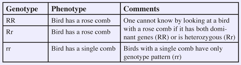 Rose Comb Chicken Traits