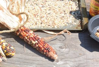 Can Chickens Eat Corn Cob? Yes!