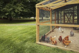 12 Tips to Help You Legalize Owning Chickens in Your Community
