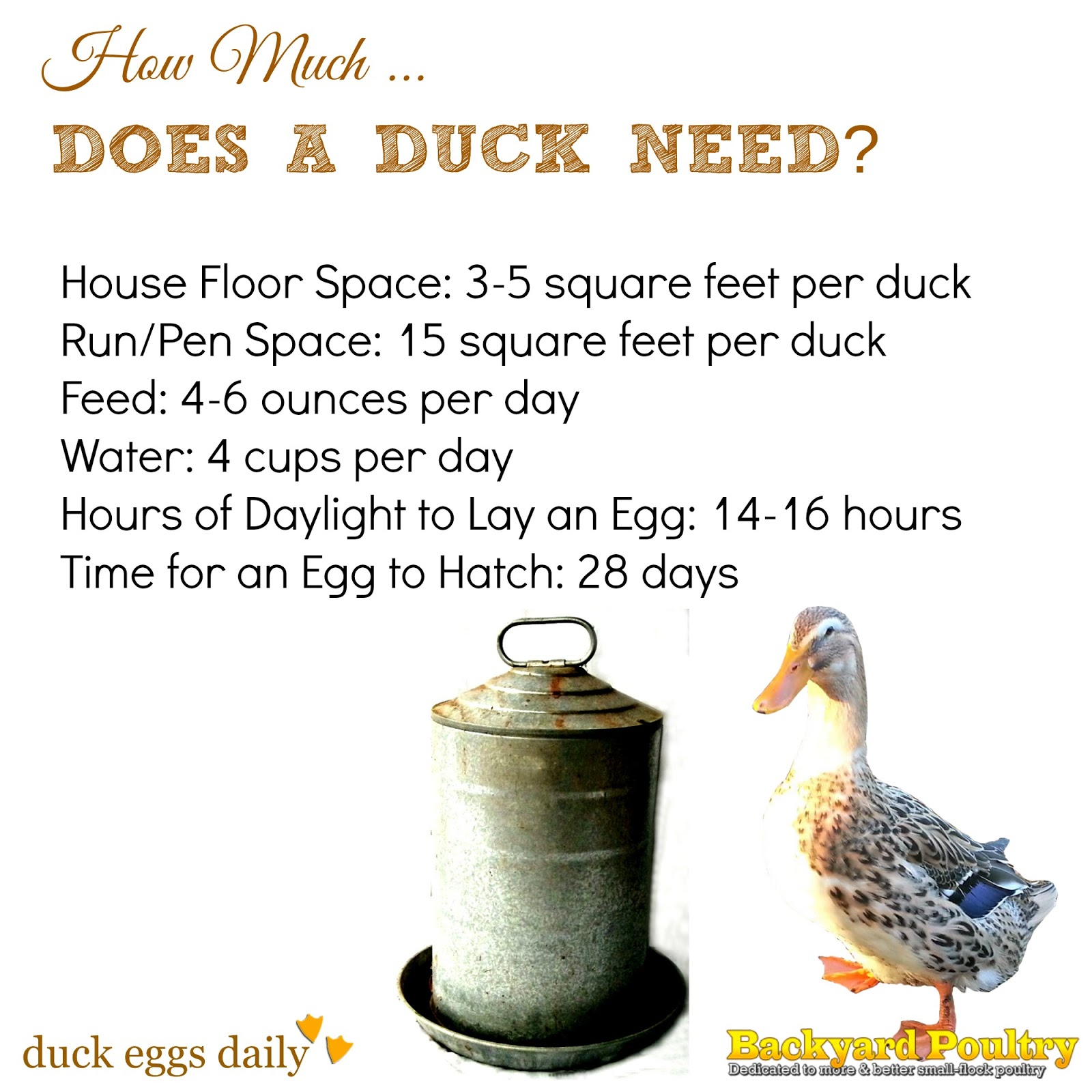 facts-about-ducks
