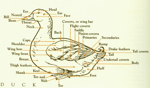 how-to-raise-ducks-in-your-backyard