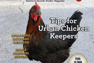 BYP Urban Chicken Keeping e-edition