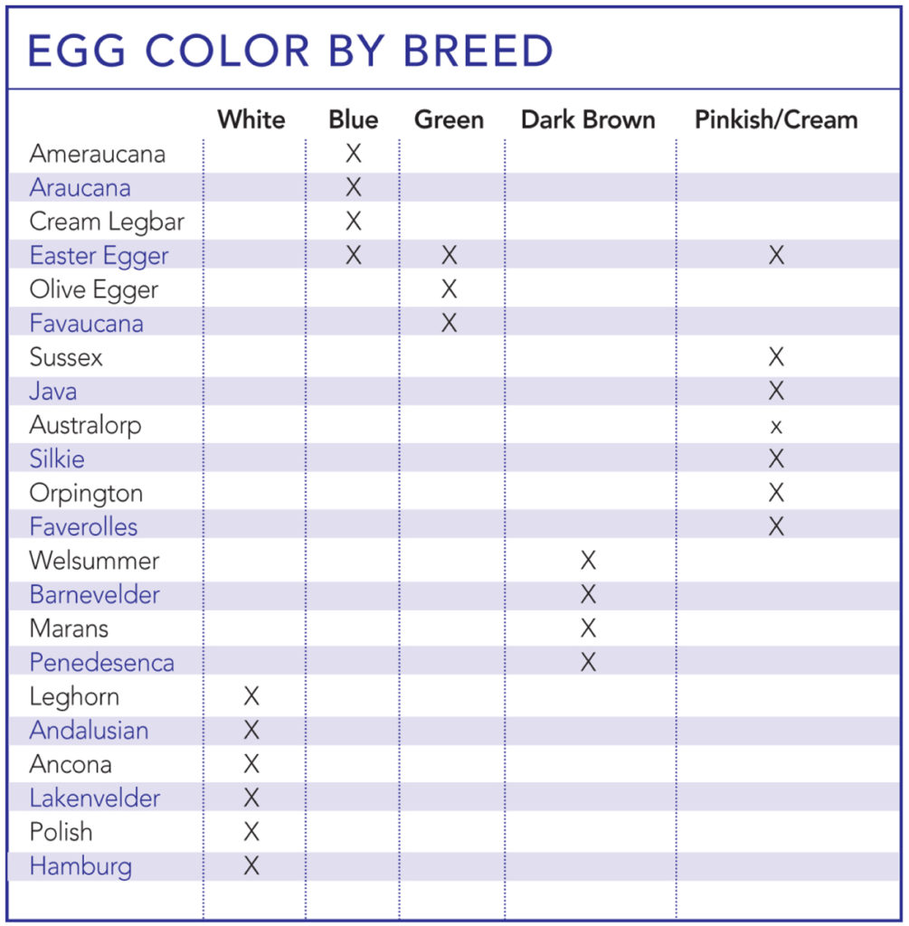 Egg Color By Breed Chart