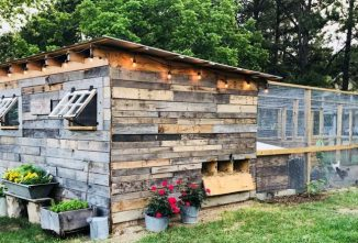 Our Coolest Coops Photo Contest is Back — Winners Announced