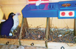 Nest boxes came from old dresser drawers and Ruby's favorite roosting spot, the play-house sink are also recycled.