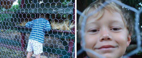 Thalia's sons enjoyed the play structure, but when it was hit by a tree it became unstable. Once it was turned into a coop, it again offered endless entertainment for the boys, as well as teaching a lesson in frugality.