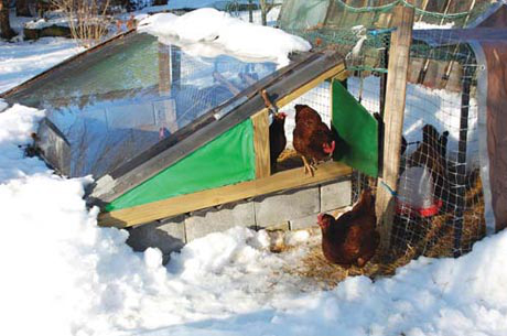"""The Fishwick's free """"Chicken Solarium"""" offers a warm sunny hangout for the chickens in the cold of winter."""