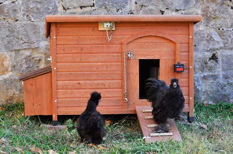 The converted doghouse is nice and snug for a few bantams, and has handles on the sides for easy moving.