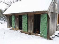 The Chicken Hilton, Harvey's 13 x 24 foot main poultry house. In winter he blocks all windows with plywood (as shown at the extreme right), but the solid front doors remain open except in the nastiest weather. Inner wire-on-frame doors can be latched closed (as in the far left doorway) to confine the birds while allowing maximum airflow and sunlight, or latched open to give the flock access to winter yards protected by electronet fencing. Photos by Harvey Ussery