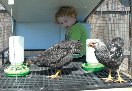 The Egg Cart'n Mini Byron uses in his backyard has a total of 24 square feet of living space. It will easily house 4-6 hens or 2 chickens and one 2-year-old boy.