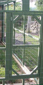 This closeup of the door to the run shows the large spaced fencing. The Lantz family will add chicken wire around the entire run to keep out the numerous predators.