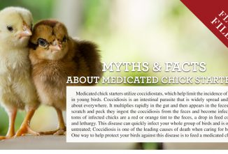 Myths & Facts About Medicated Chick Starters