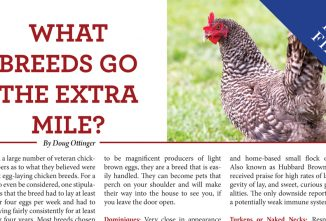What Breeds Go The Extra Mile?