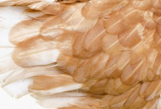 Ask the Expert: Feathers