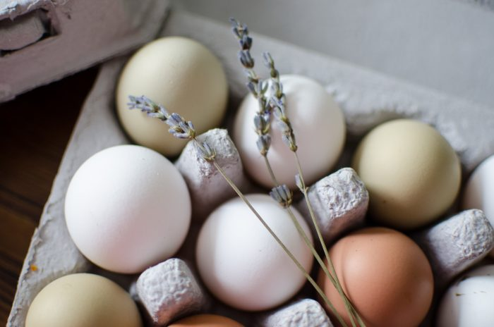 Selling Eggs as a Business on the Homestead