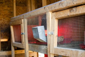 Setting Up Your Outdoor Chicken Brooder