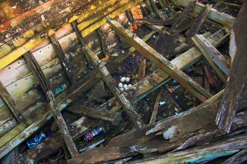 eggs-laid-on-the-floor-of-ruin